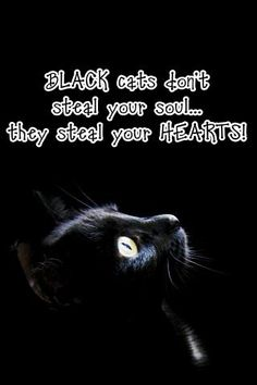 Black cats don't steal your soul...they steal your ℌℯαят❣❣