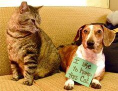 Como Entrenar A Un Perro A Ir Al Baño. Como entrenar a un perro a ir al baño  Si tienes un perro en casa y tienes el gran problema de dejar su excremento por todo el lugar, pues es hora de educarlo y enseñarle para que vaya al baño y así no te de problemas en casa y además, el lugar no estará mal oliente. Cada perro tiene que ser educado, ya sea para la obediencia y también para que aprenda algunos trucos y enseñarle a que vaya al....  Como Entrenar A Un Perro A Ir Al Baño. Para ver el…