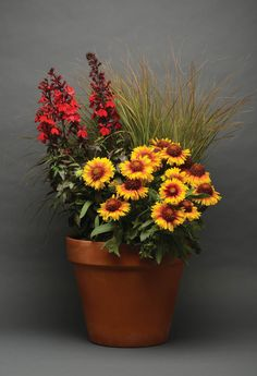 New Combo Garden Packages Offer A Great Mix For 2015 | Today's Garden Center