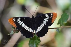 Butterfly by jmar3510. @go4fotos