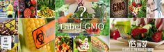 GMO foods - To label or not to label… That is the question.  I think Monsanto should be restricted and genetically modified foods should be labeled.  The FDA, once again, should be all over this, but I'm almost sure they get several million dollars in their pockets from Monsanto, if not billions.