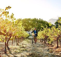 Ten South African wineries