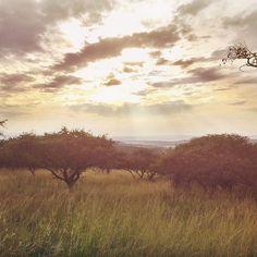 Sunrise over Notuli Game Reserve in Albert Falls last week. African savanna right on your door step. Albert Falls, South Africa.  #sunrise #savanna #bush #veld #clouds #grass #wanderlust #explore #beauty #nature #naturalbeauty #instapic #instagram #instanature #instagood #sun #africa #southafrica #kzn #southafricanskies #safari #trail  #albertfalls #notuli Door Steps, Game Reserve, Rock Climbing, Mountain View, Insta Pic, South Africa, Natural Beauty, Safari, Grass
