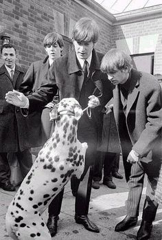 fab four playing with a dalmatian