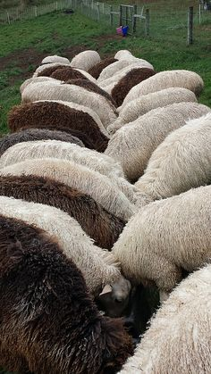 lambswool on the hoof | Flickr - Photo Sharing!