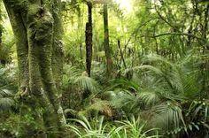 Medicinal Herbs of New Zealand