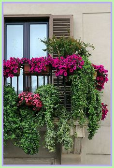 balcony patio plants-#balcony #patio #plants Please Click Link To Find More Reference,,, ENJOY!! Apartment Balcony Garden, Apartment Plants, Balcony Plants, Apartment Balconies, Apartment Gardening, Glass Balcony, Patio Plants, Balcony Window, Balcony Gardening