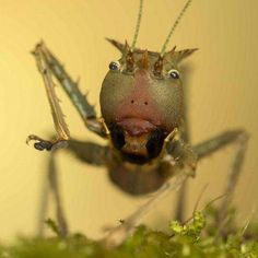 Cringe-Worthy Cricket Captures - Macro Photography by Peter Reijners is Extremely Peculiar (GALLERY)