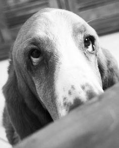 Rita, my Dog