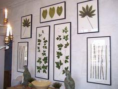 Becky Davis Botanica