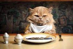 Risultati immagini per gatto stanchissimo