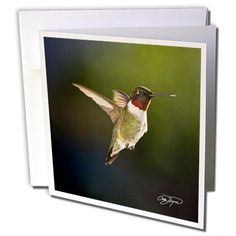 #Angel in Flight 2012 First Hummingbird Arrives Ruby Throated #Bird - Greeting #Cards-6 Greeting Cards with envelopes 3dRose http://www.amazon.com/dp/B0089E8K1U/ref=cm_sw_r_pi_dp_2jNqub04HPWQP