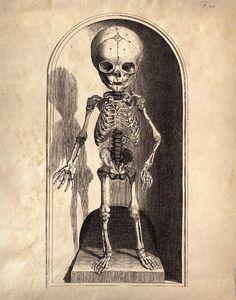 Vintage Anatomy Child's Skeleton