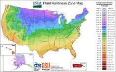 The USDA Plant Hardiness Zone Map helps gardeners determine which plants will thrive in their location. Find plants for your USDA Zone here. Planting Zones Map, Plant Zones, Gardening Zones, Container Gardening, Gardening Tips, Flower Gardening, Garden Plants, Permaculture Garden, Planting Plants