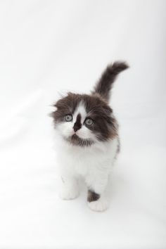 Cyoot Kitteh of teh Day: Is It Me Youre Looking For?