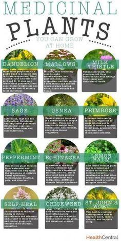Medicinal Plants You Can Grow at Home #gardening #herbs #dan330 http://livedan330.com/2015/01/16/medicinal-plants-can-grow-home/