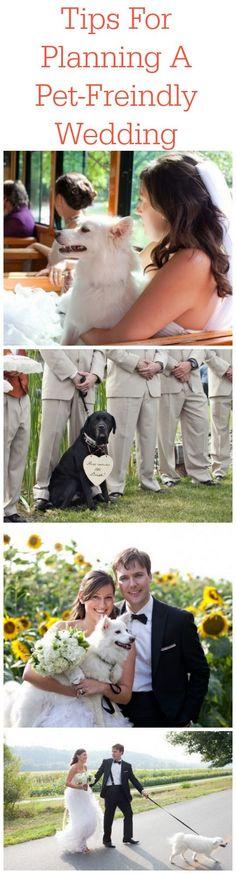 Tips For Planning A Pet-Friendly Wedding #DogWedding