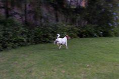 Open house - Marcia Peluffo Zahran. Veja: http://www.casadevalentina.com.br/blog/detalhes/open-house--marcia-peluffo-zahran-2782 #decor #decoracao #interior #design #casa #home #house #idea #ideia #detalhes #details #openhouse #casadevalentina #nature #natureza #garden #yard #jardim #dog #cachorro