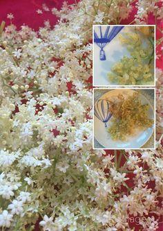 fiori di sambuco fritti come le patatine   fai una passeggiata nel verde. raccogli i fiori. prima di cucinarli lavali e lasciali asciugare. prepara una pastella con 100gr di acqua gasata fredda, e 50 gr di birra leggera,4cucchiai di farina e uno di zucchero.amalgama bene e metti in frigo per mezz'ora  scalda l'olio e via,,, in pastelli i fiori X bene, attendi che eccesso pastella scivoli via e poi nell'olio! mangiati così o con un filo di miele sopra.
