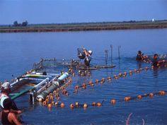 oman-aquaculture