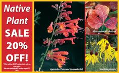 Native Plant sale 20% off!