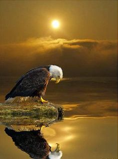Eagle at sunset ~ Th