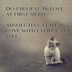 Kittens Cutest, Cats And Kittens, Cute Cats, Funny Cats, Funny Animals, Cute Animals, Cats Humor, Funny Horses, Funniest Animals