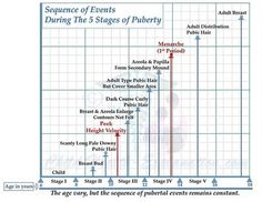Puberty: Sequence of Events: The age of each event varies, but the sequence…
