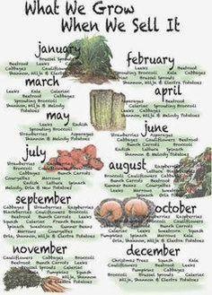Farm shop seasonal calender, love it! Farm shop seasonal calender, love it! Homestead Farm, Homestead Gardens, Farm Gardens, Homestead Layout, Homestead Survival, Veggie Gardens, Organic Gardening, Gardening Tips, Organic Farming