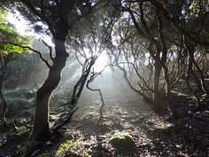Information and maps on Hiking in Ikaria - Mountain Walking Paths & Nature Trails in Ikaria. Walking Paths, Walking Tour, Ikaria Greece, Greek Flowers, Forest Mountain, Slow Travel, Tree Forest, Flowering Trees, Greek Islands
