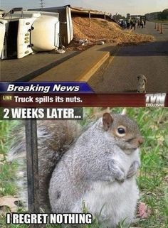Squirrel Thug Life.