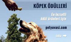 Ödüller, köpek eğitiminde en önemli yardımcınızdır. Satın alabileceğiniz en lezzetli ve en yararlı köpek ödülleri ürünleri petyuvasi.com'da.  İncelemek için ► http://www.petyuvasi.com/kopek-odulleri-kat75.html