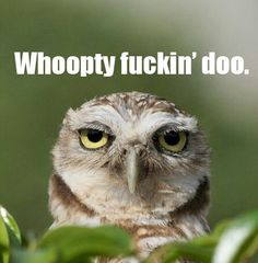 Funny pictures about Unimpressed Owl. Oh, and cool pics about Unimpressed Owl. Also, Unimpressed Owl photos. Funny Shit, Haha Funny, Funny Stuff, Funny Things, Tired Funny, Tgif Funny, Crazy Funny, Crazy Things, Random Stuff
