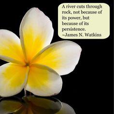 James N Watkins quote