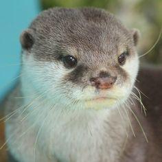 Otterly cute otter!