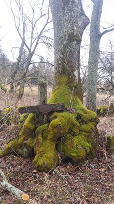 Cmentarz Stary Łupków Belgium, Poland, Statue, Landscape, Trees, Sculpture, Scenery, Tree Structure, Sculptures