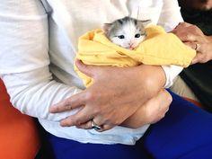 My cat had a purrito http://ift.tt/2oRlEv9
