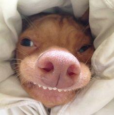 New funny good morning memes humor Ideas Funny Dogs, Funny Animals, Cute Animals, Funny Memes, Memes Humor, Funny Good Morning Memes, Morning Humor, Bad Morning, Morning Person