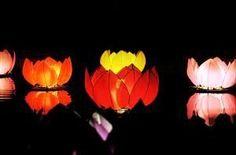 Felinare plutitoare nufar  Floating lotus lantern