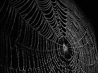 A Word Fitly Spoken: What a Tangled Web! -- a devotion by Christian author and speaker, Dana Rongione