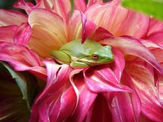 I love frogs too!
