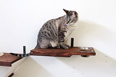 cat wall shelves for cat room - CatastrophiCreations Cat Dining Table Handcrafted Wall-Mounted Feeder Shelf *** Check out this great product. (This is an affiliate link) Cool Cat Trees, Cool Cats, Crazy Cat Lady, Crazy Cats, Cat Wall Shelves, Shelf, Cat Tree Plans, Cat Perch, Cat Climbing