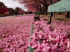 Primavera / Spring by Carlos Kazeu, via Flickr