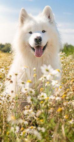 Unique Animals, Animals And Pets, Cute Animals, Cute Puppies, Cute Dogs, Dogs And Puppies, Doggies, Beautiful Cats, Animals Beautiful