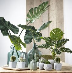 Find Out 15 Proper Ideas To Decorate Bedroom Plants Decor In 2019 - Home Improvement - Bedroom Indoor Garden, Indoor Plants, Home And Garden, Hanging Plants, Vase Vert, Bedroom Plants Decor, Plants Are Friends, Deco Floral, Décor Boho