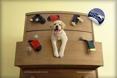 moscabranca: Ron Schmidt, um fotógrafo bom pra cachorro!