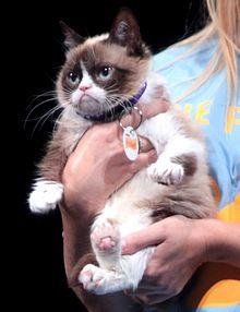 Grumpy Cat - Wikipedia