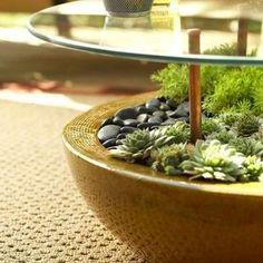 Framed Succulents - Succulent Planter Ideas - 11 Creatively Stylish Displays - Bob Vila