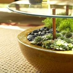 Succulent Coffee Table - Succulent Planter Ideas - 11 Creatively Stylish Displays - Bob Vila