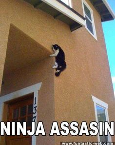 Watch Out, Ninjas About